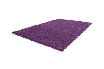 Nord Purple